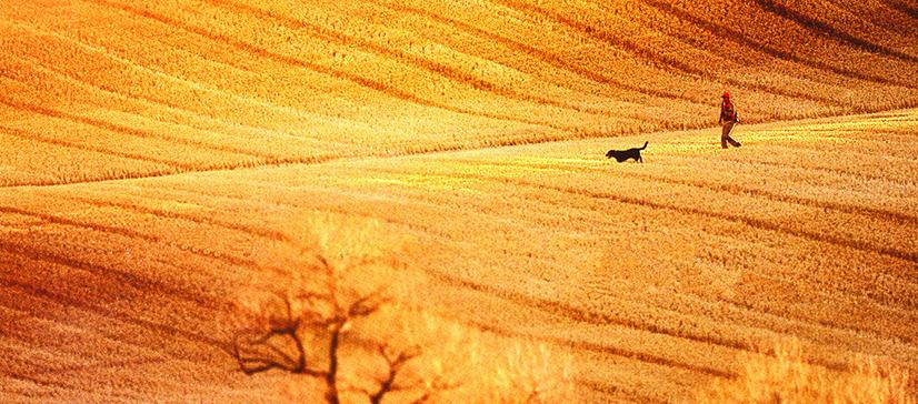 fieldhunter